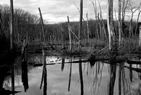 Mike_Eubanks_North Point Swamp